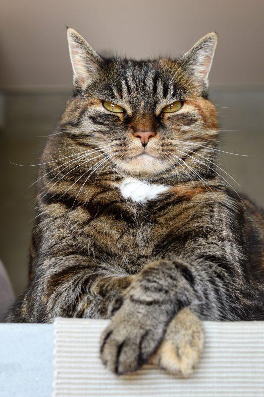 Disciplina positiva Laia Riben gato enfadado
